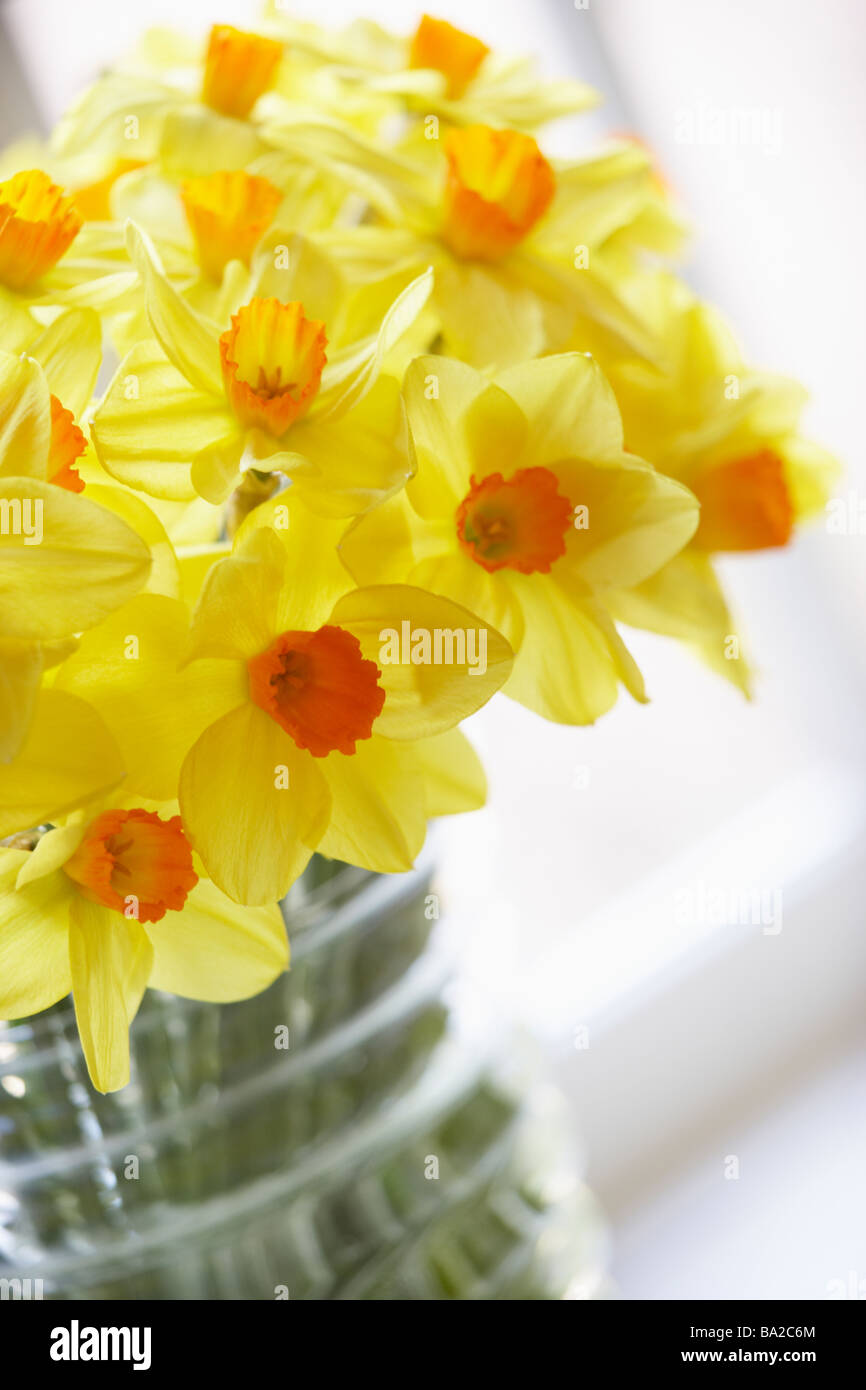 Spring flowers daffodils vase stock photos spring flowers bouquet of daffodils stock image mightylinksfo
