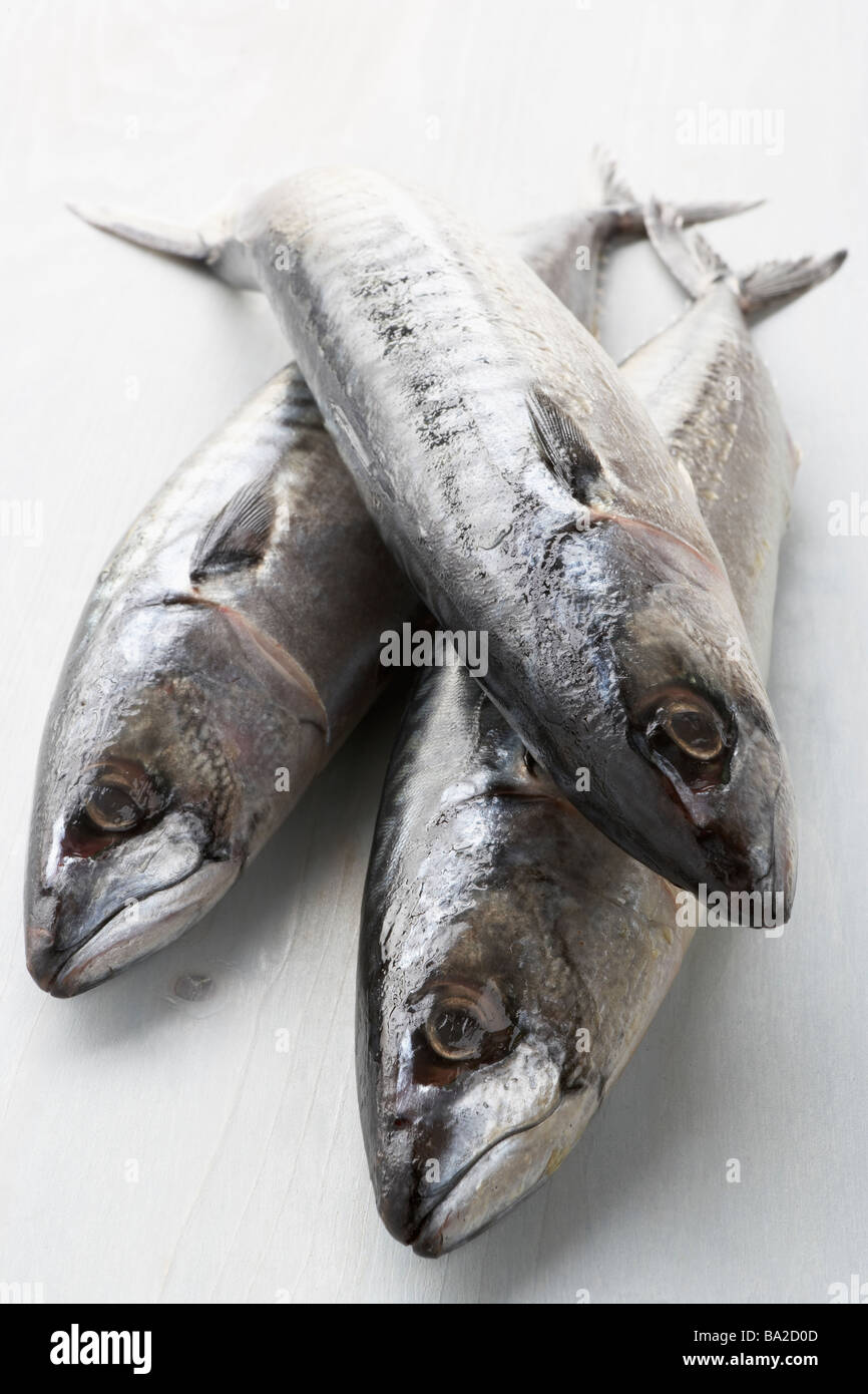 Fresh Fish On Bench - Stock Image