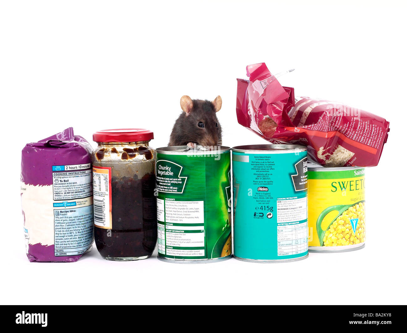 A brown rat surrounded by food, a rat in a kitchen. - Stock Image