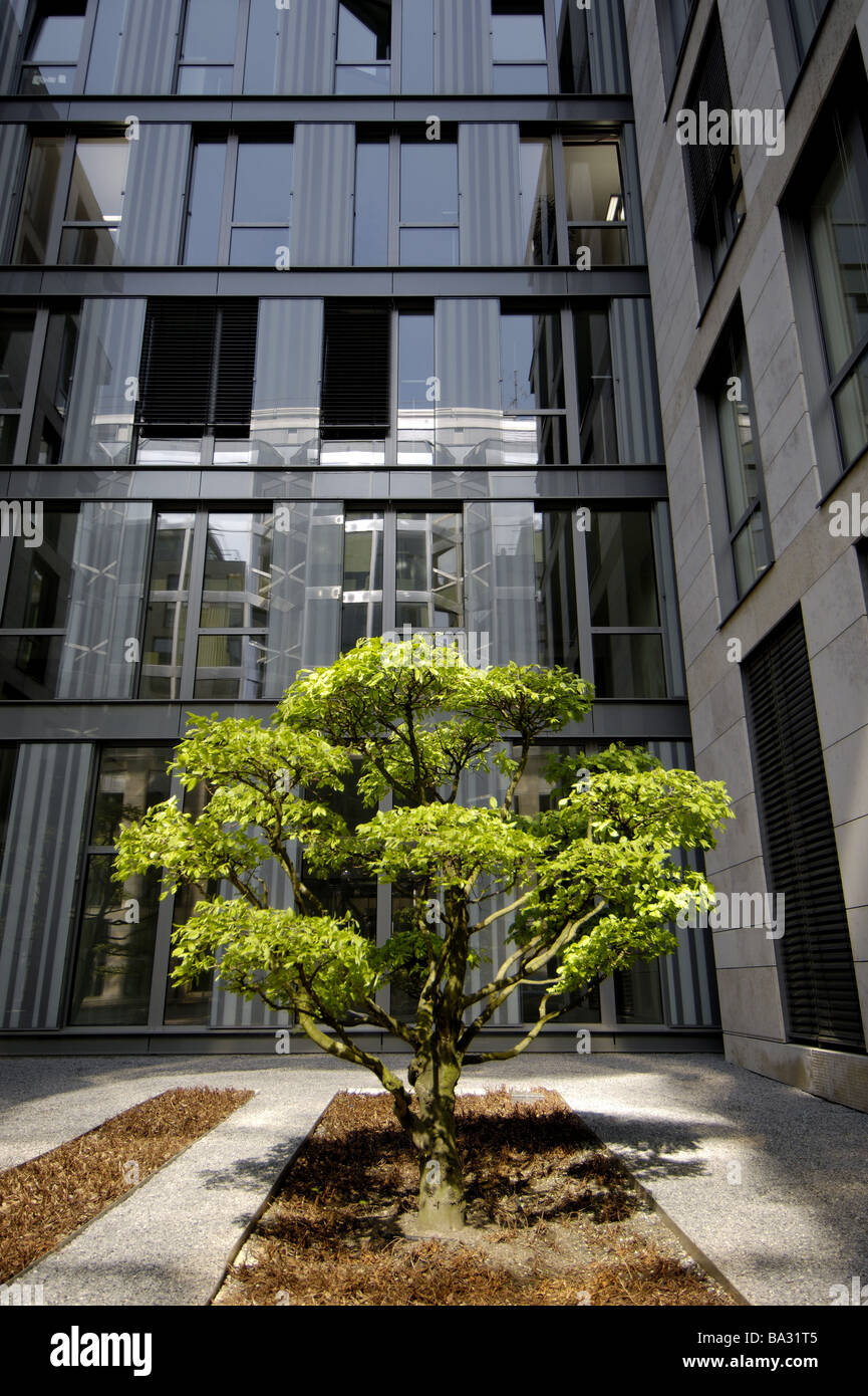 office tree. Germany Düsseldorf Office Buildings Inner Courtyard Foliage-tree High-rise-facade Facade Yard Plant Tree Contrast