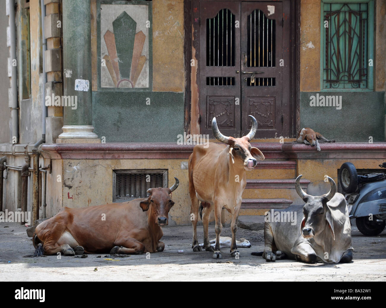 Friendship in an Ahmedabad street - Stock Image