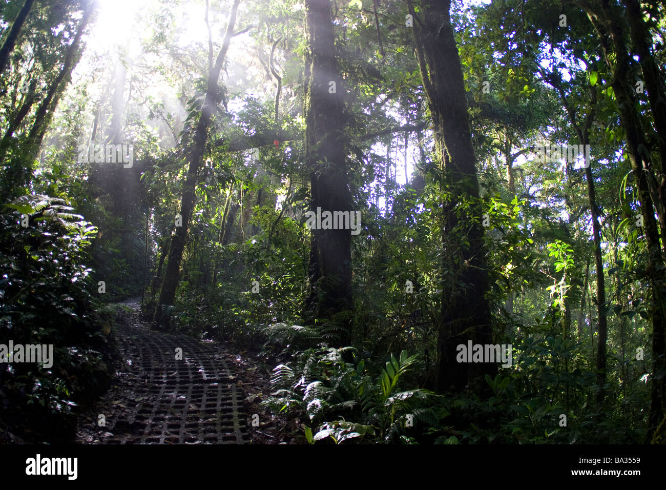 Light shines through trees in rain forest in Costa Rica, Central America - Stock Image