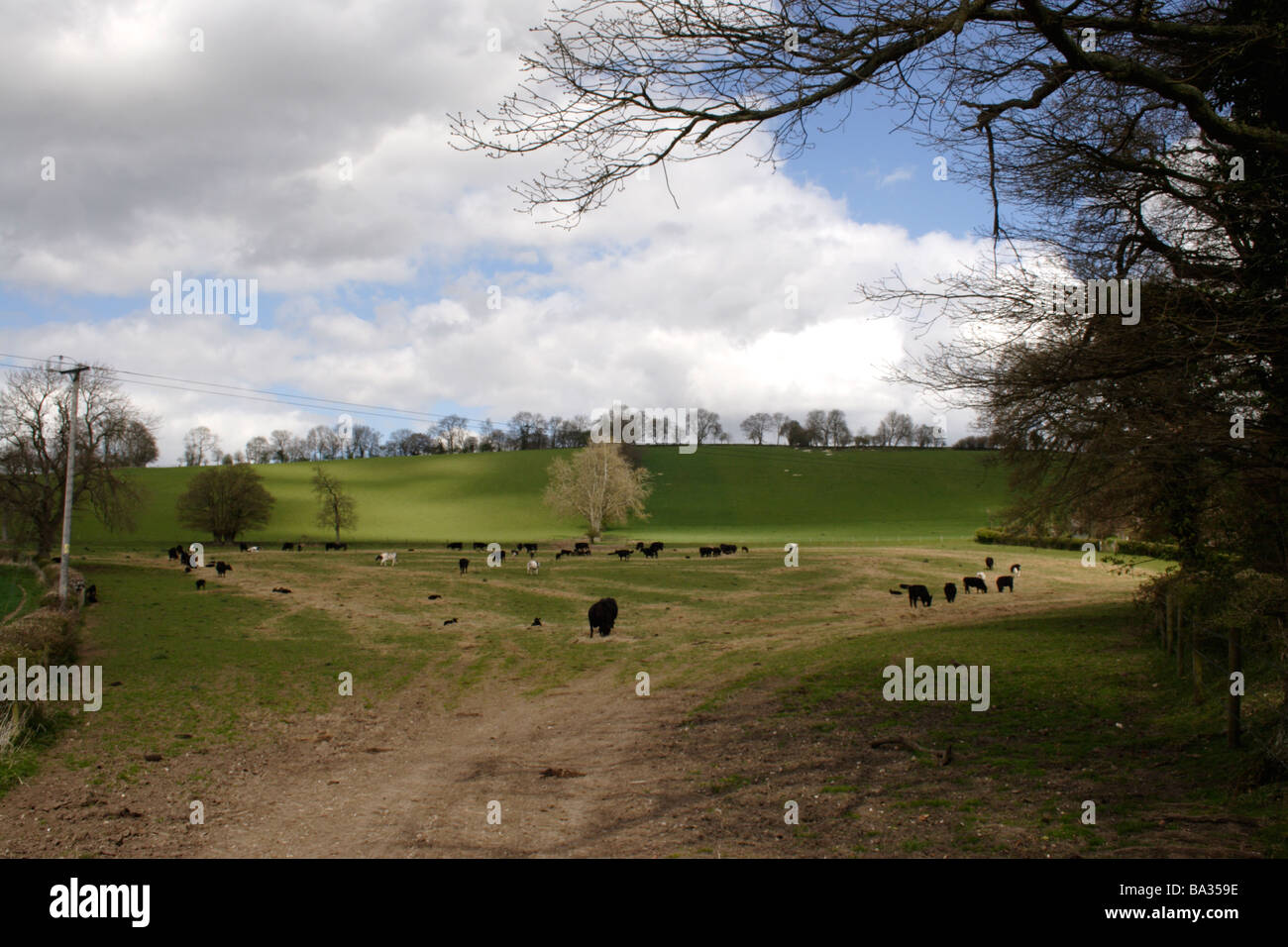 Chilterns Buckinghamshire - Stock Image