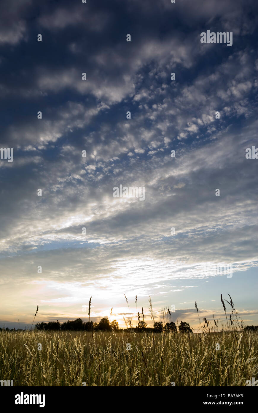 Sun setting over the wild grasses aRGB - Stock Image