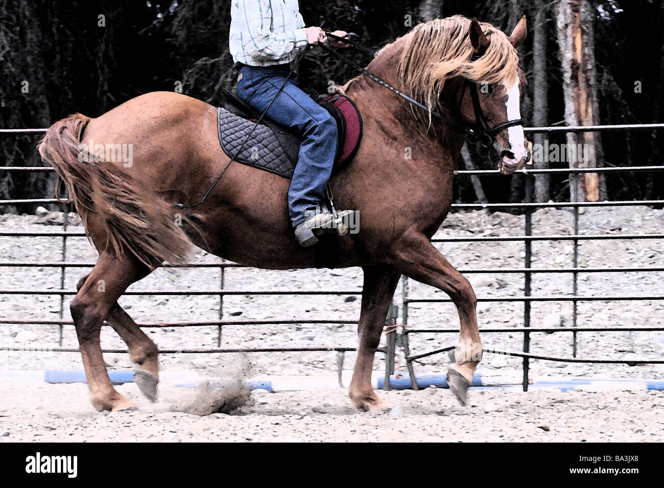 Half-Draft Mare in a training session. - Stock Image
