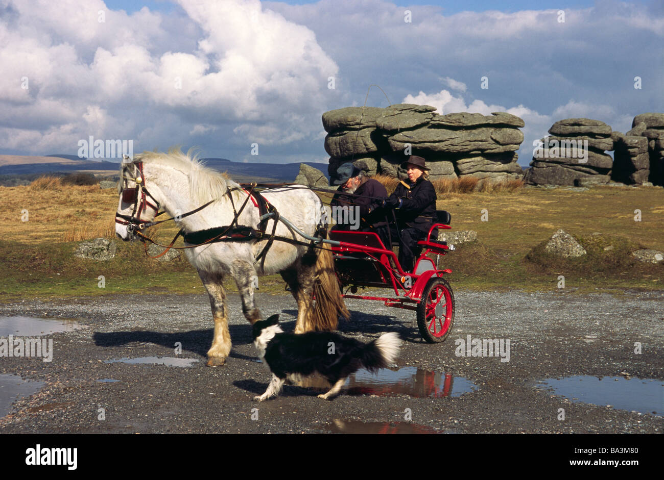 Pony and Trap at Combestone Tor with Johnny Arden instructing a pupil - Stock Image