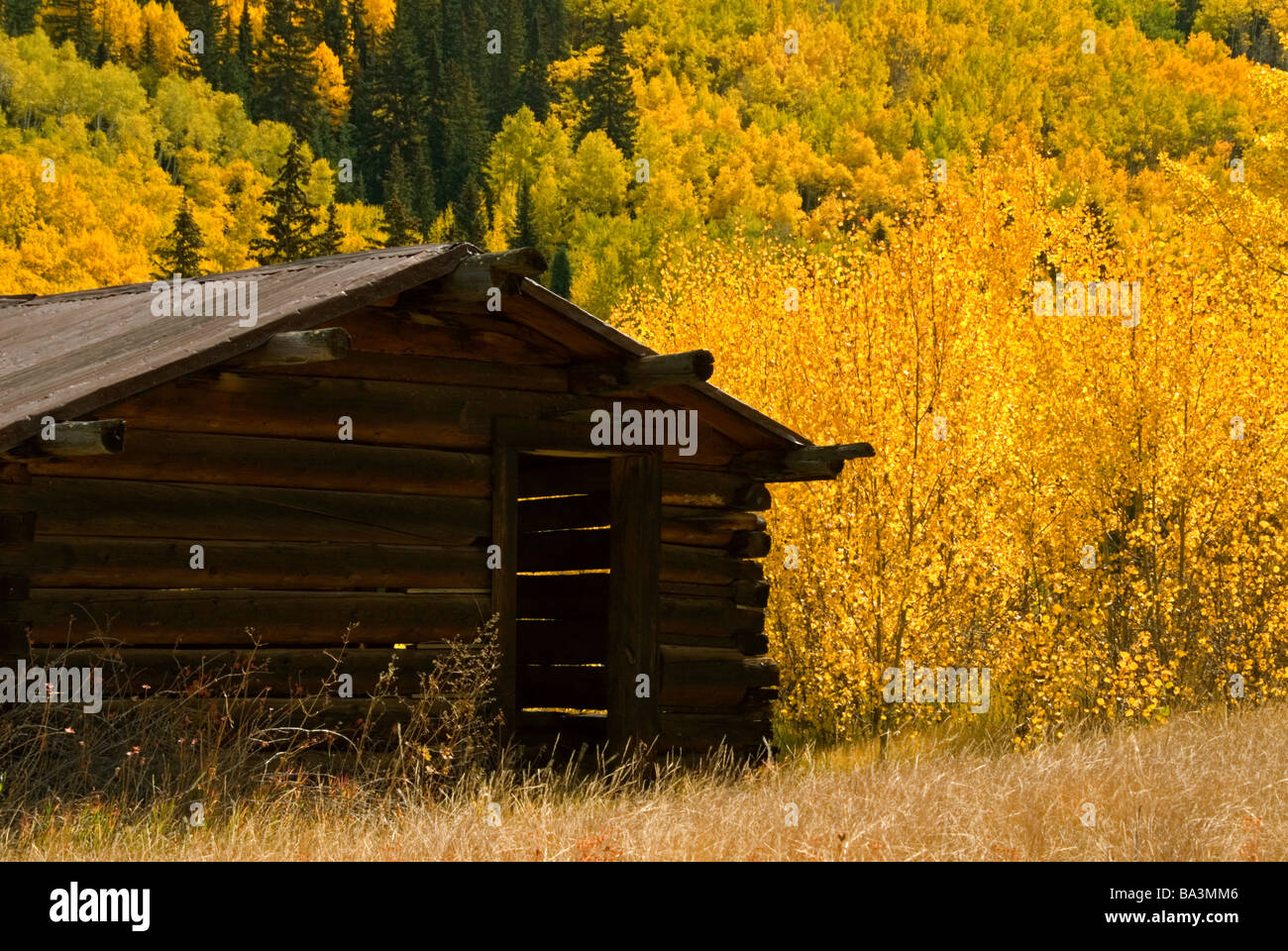 Old log cabin in autumn, Ashcroft, Colorado US - Stock Image