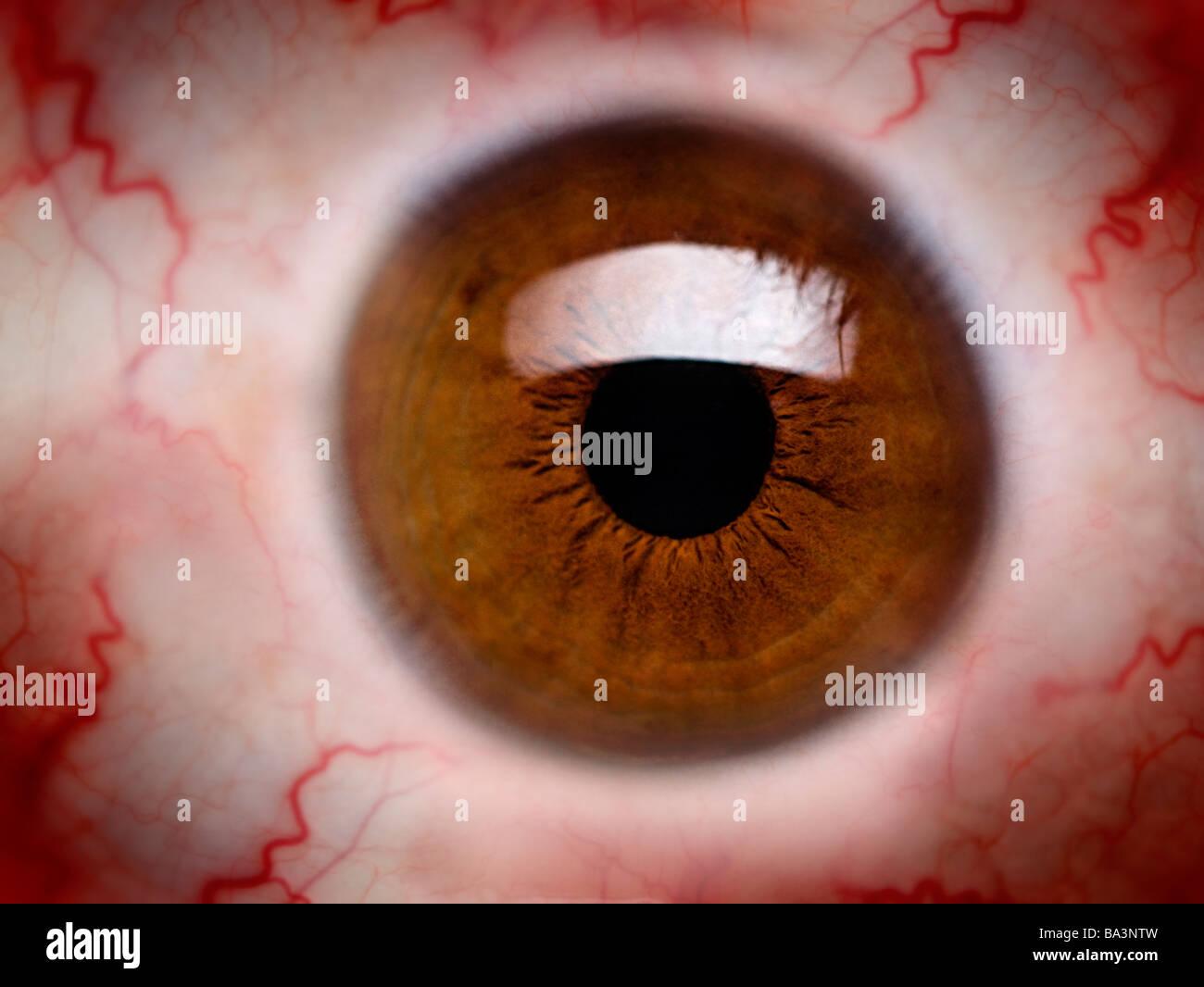 brown eyes - Stock Image