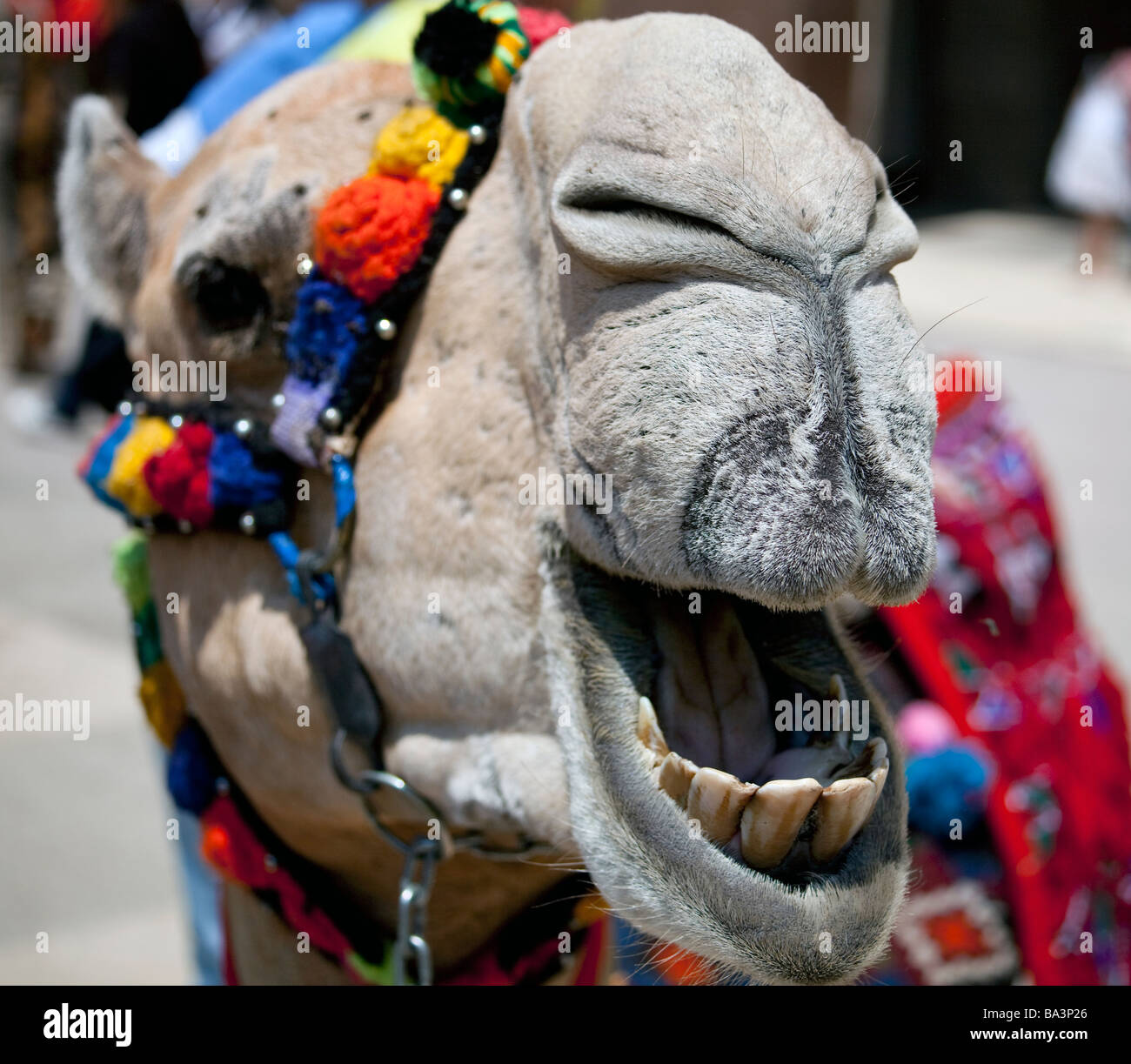 costumed camel at International Students' Day, American University in Cairo, Egypt - Stock Image