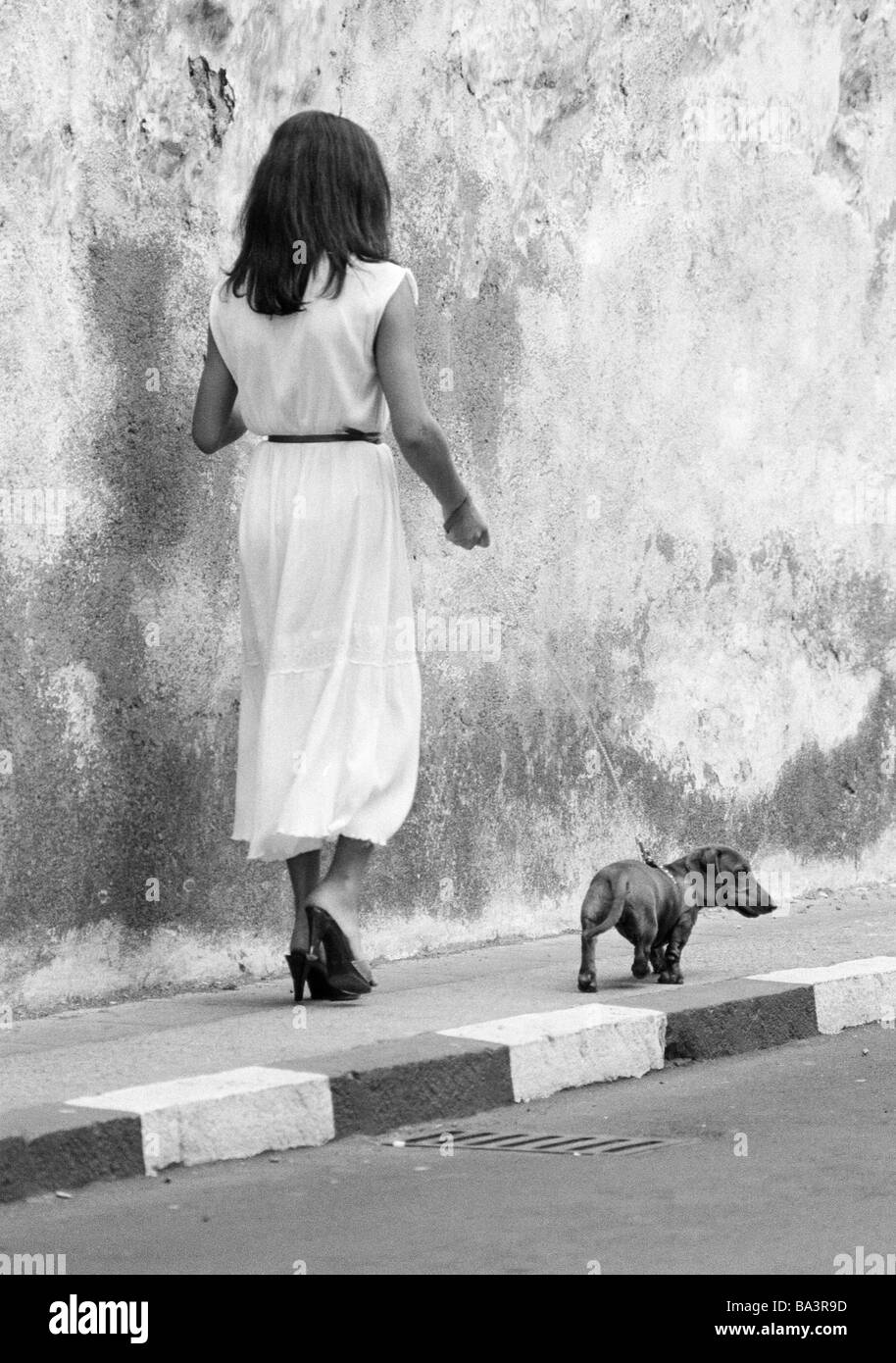 Eighties, black and white photo, human and animal, young woman walks a dachshund on a lead, aged 25 to 35 years, - Stock Image