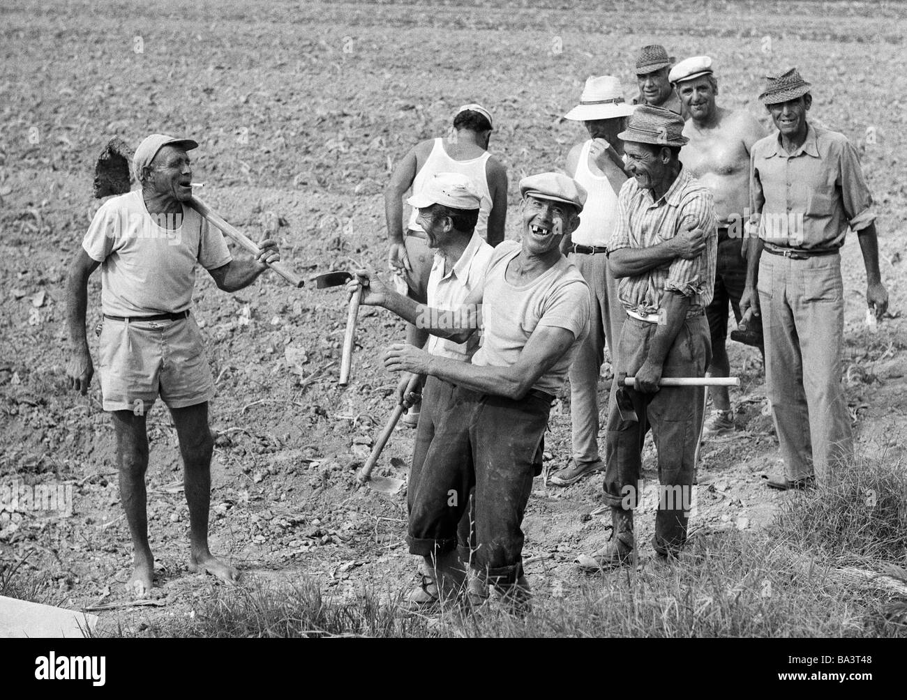 Seventies, black and white photo, agrarian economy, field work, farm workers in the Huerta in the province of Valencia - Stock Image