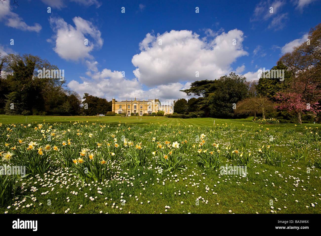Missenden Abbey spring daffodils buckinghamshire - Stock Image