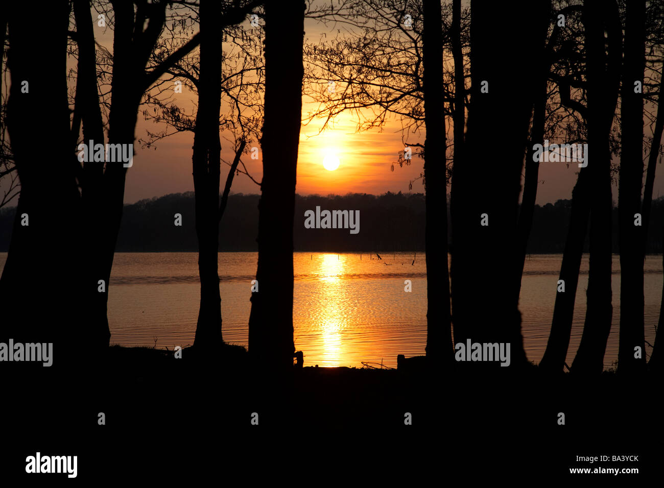 sunsetting through trees over lough neagh county antrim northern ireland - Stock Image