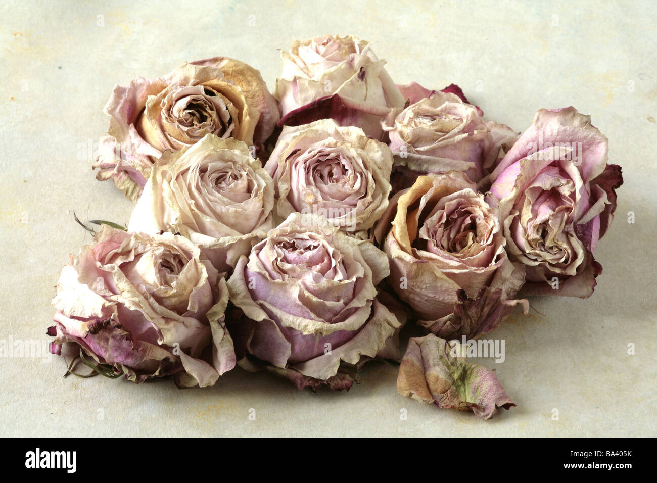 Rose Blooms Dried Flowers Roses Blooms Bloom Heads Petals Pink Stock