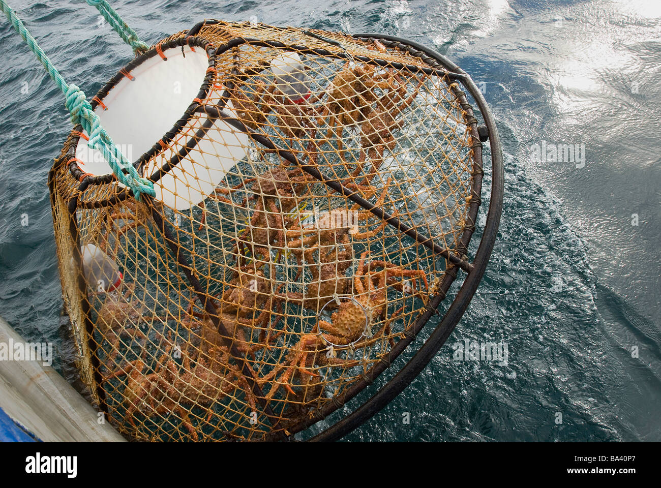 Crab pot is hauled up over the side of the boat during the commercial Stock Photo: 23445359 - Alamy