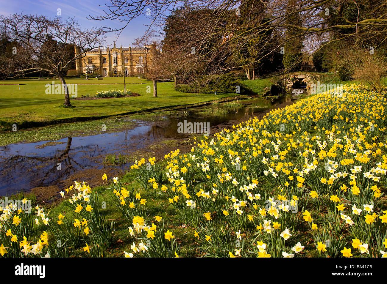 Missenden Abbey spring daffodils misbourne river buckinghamshire - Stock Image