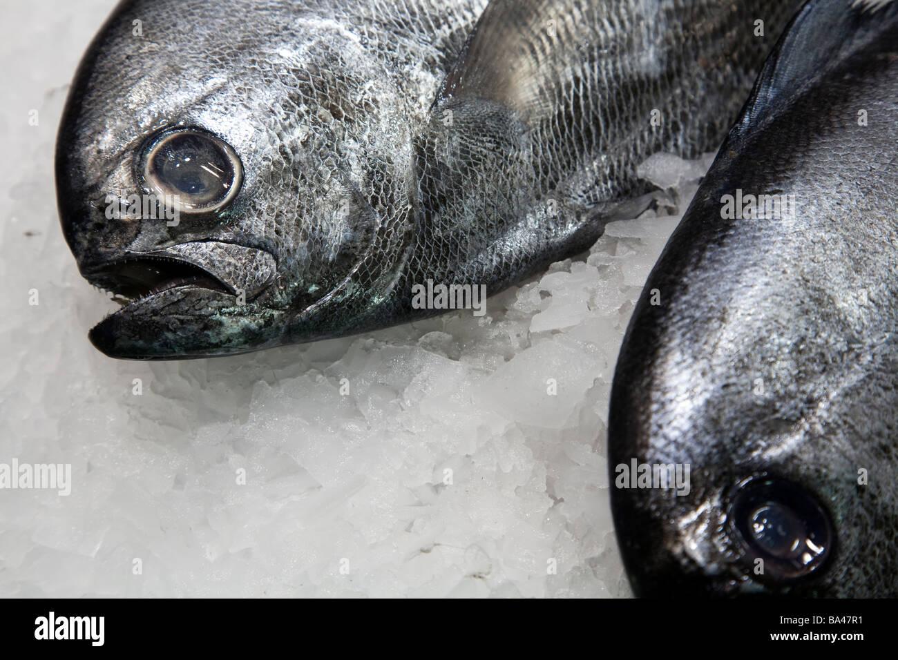 Pompano fish Boqueria market town of Barcelona autonomous commnunity of Catalonia northeastern Spain - Stock Image