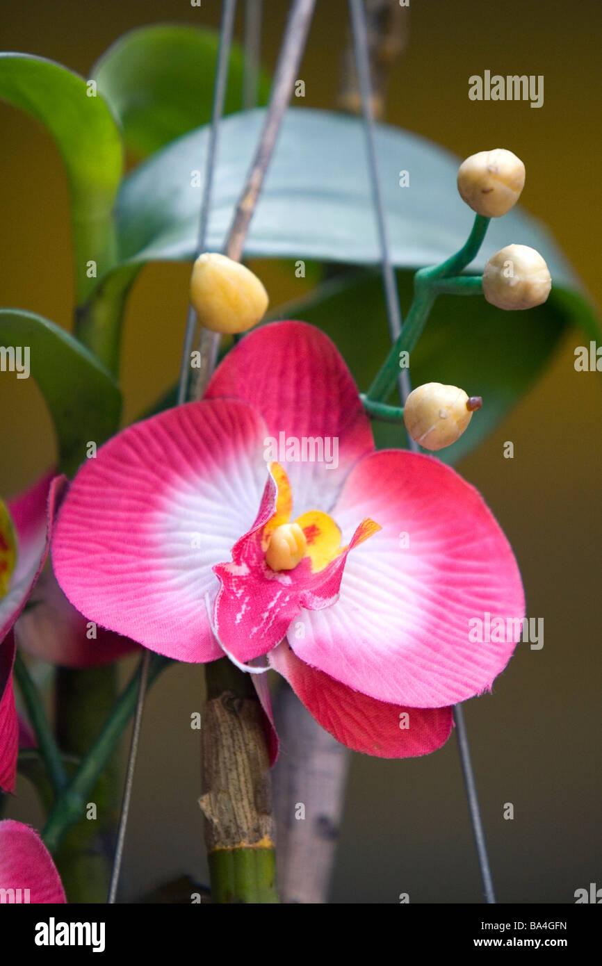 Silk orchid flowers in Hue Vietnam - Stock Image