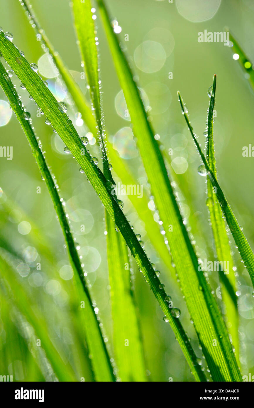 Grass and droplets - Stock Image