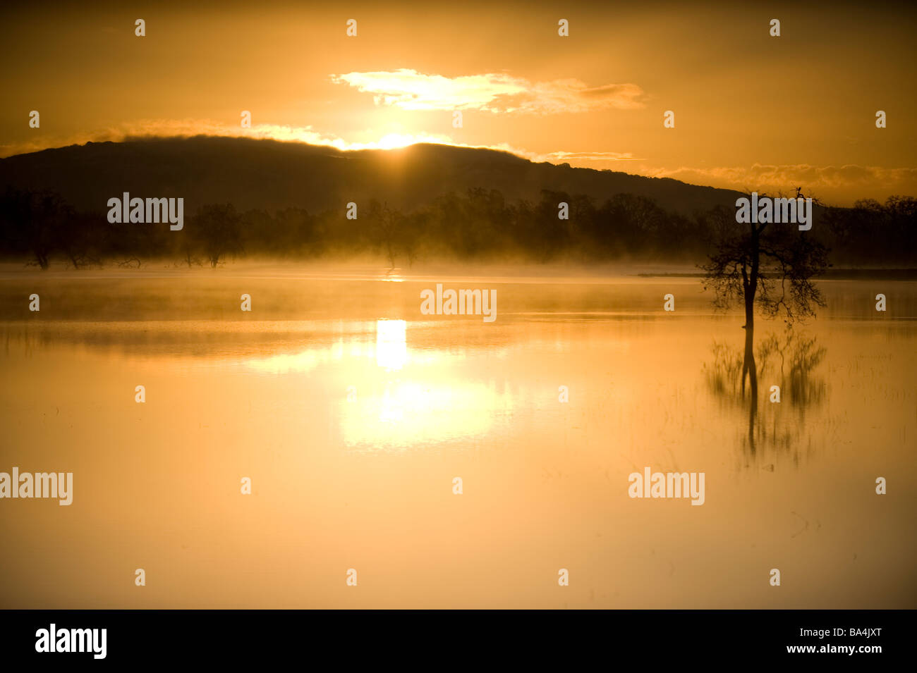 Trees and reflections in water at sunrise - Stock Image