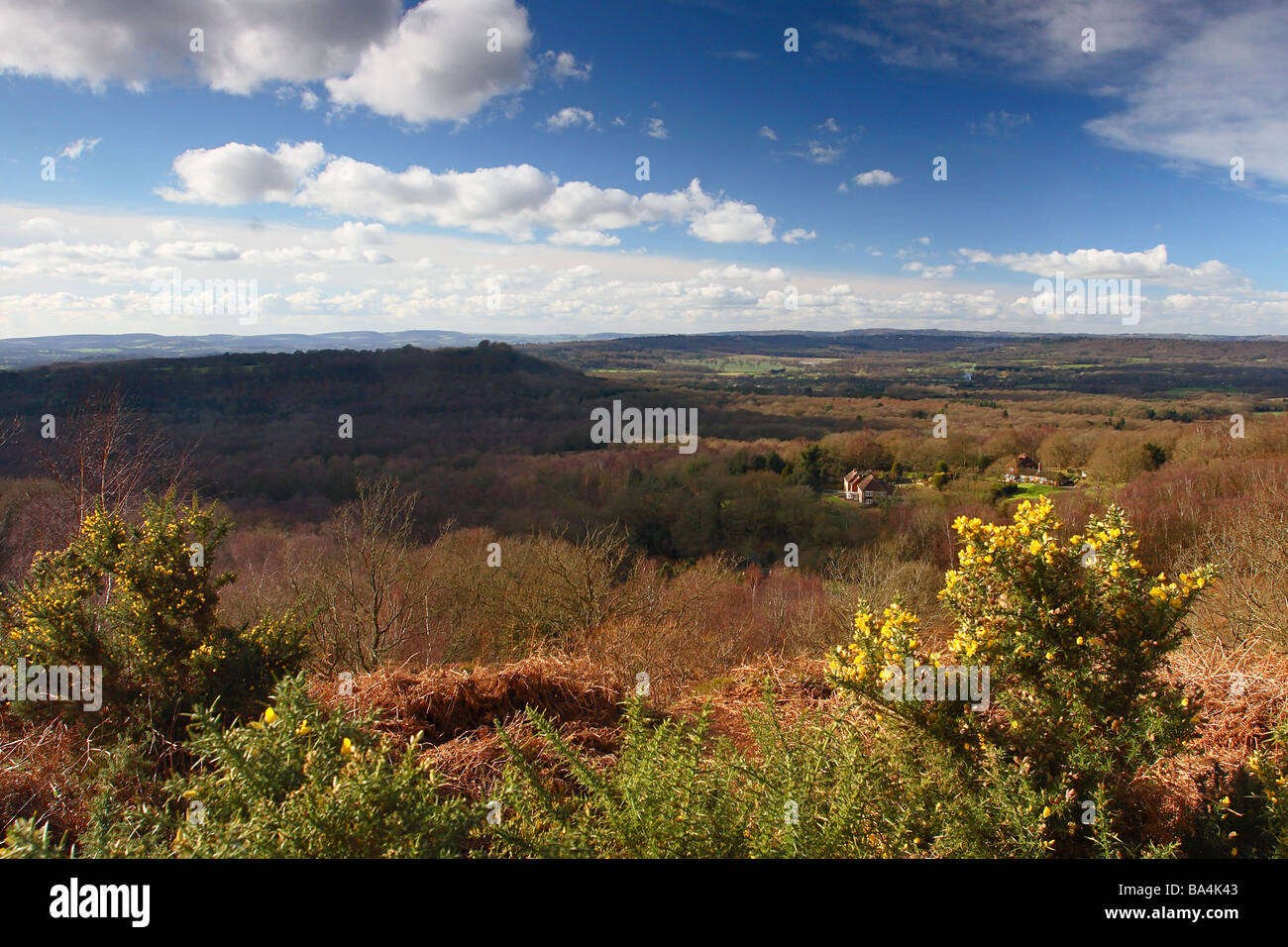 South Downs - Woolbeeding Common Sussex - Stock Image
