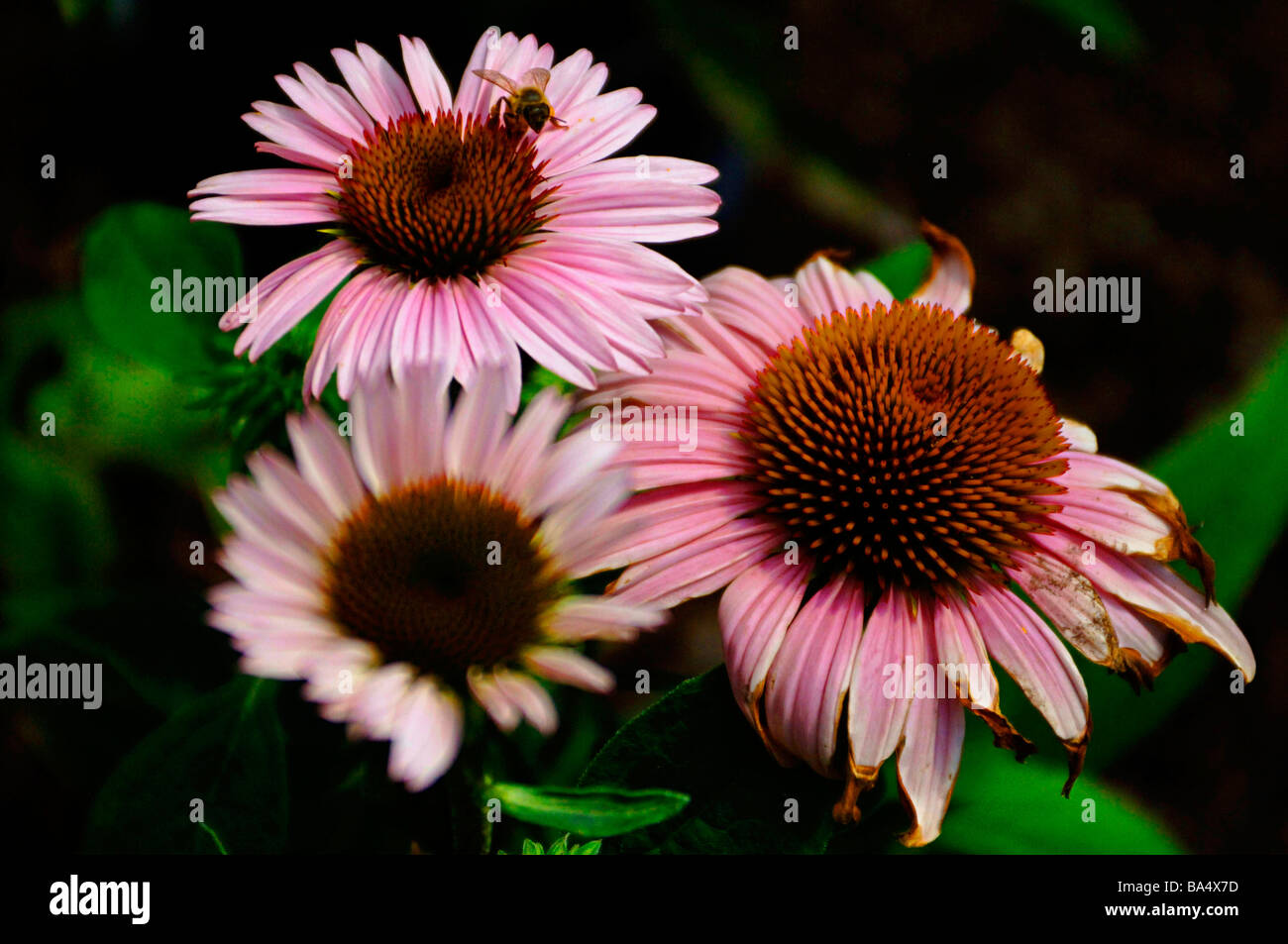 Tropical, wild, and perennial flowers showing assorted colors. Stock Photo