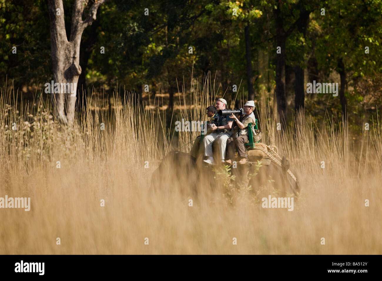Tourists with telephoto lenses ride on elephant to track tigers in Bandhavgarh National Park Madhya Pradesh Northern - Stock Image