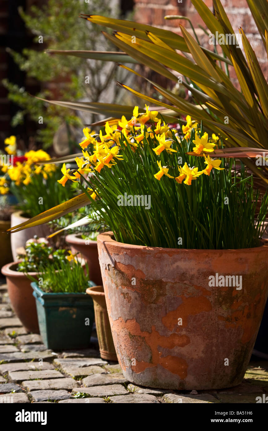Pots Of Spring Flowers At Staunton Harold Arts And Crafts Centre
