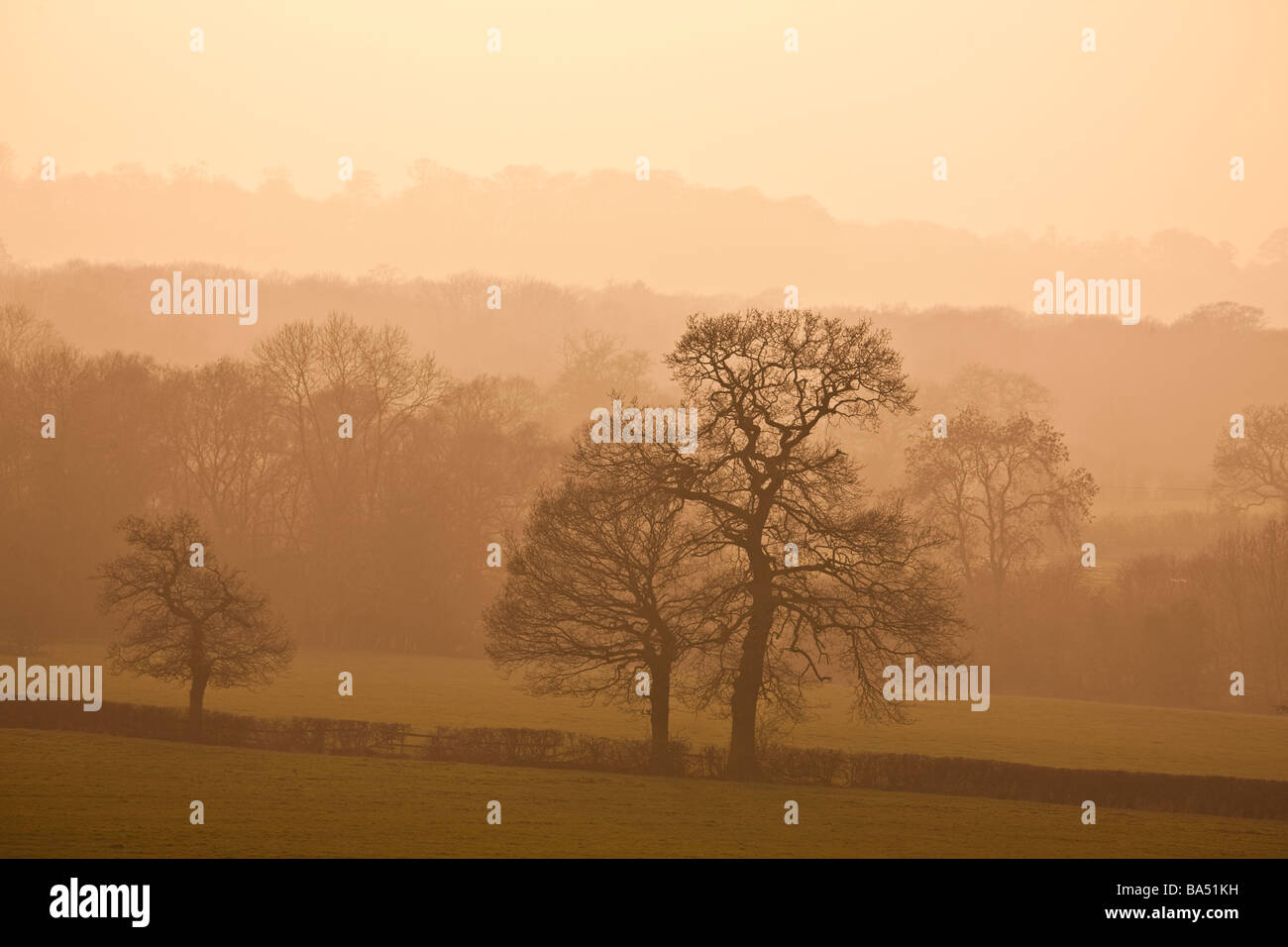 View over Staunton Harold Woods Leicestershire late evening - Stock Image