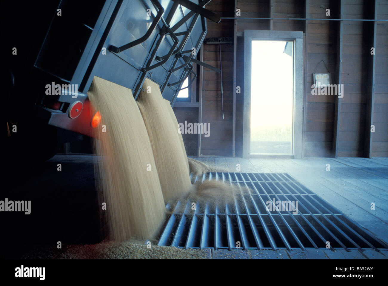 Truck dumping wheat into grate - Stock Image