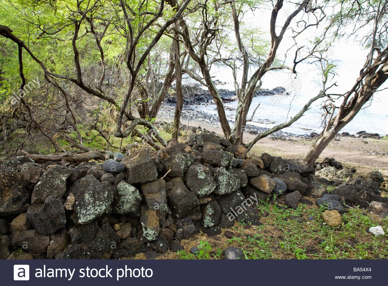 Overgrown ancient Hawaiian cultural site at La Perouse Bay on the island of Maui in the state of Hawaii USA - Stock Image