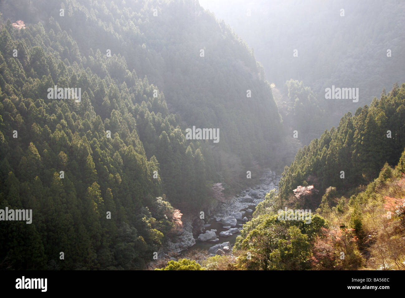Iya Vally Japan - Stock Image