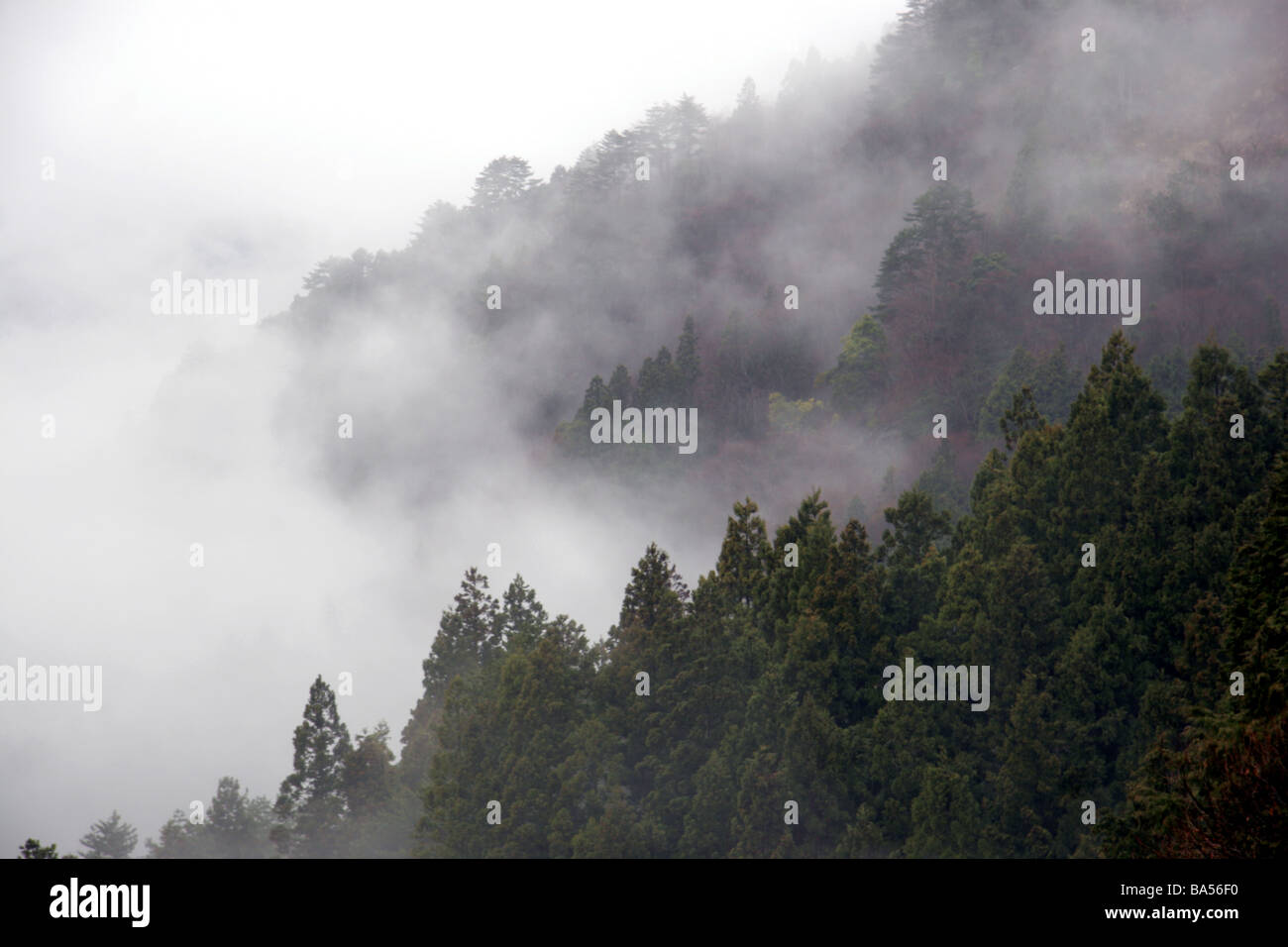 Mist raising through the trees in Iya Vally Japan - Stock Image