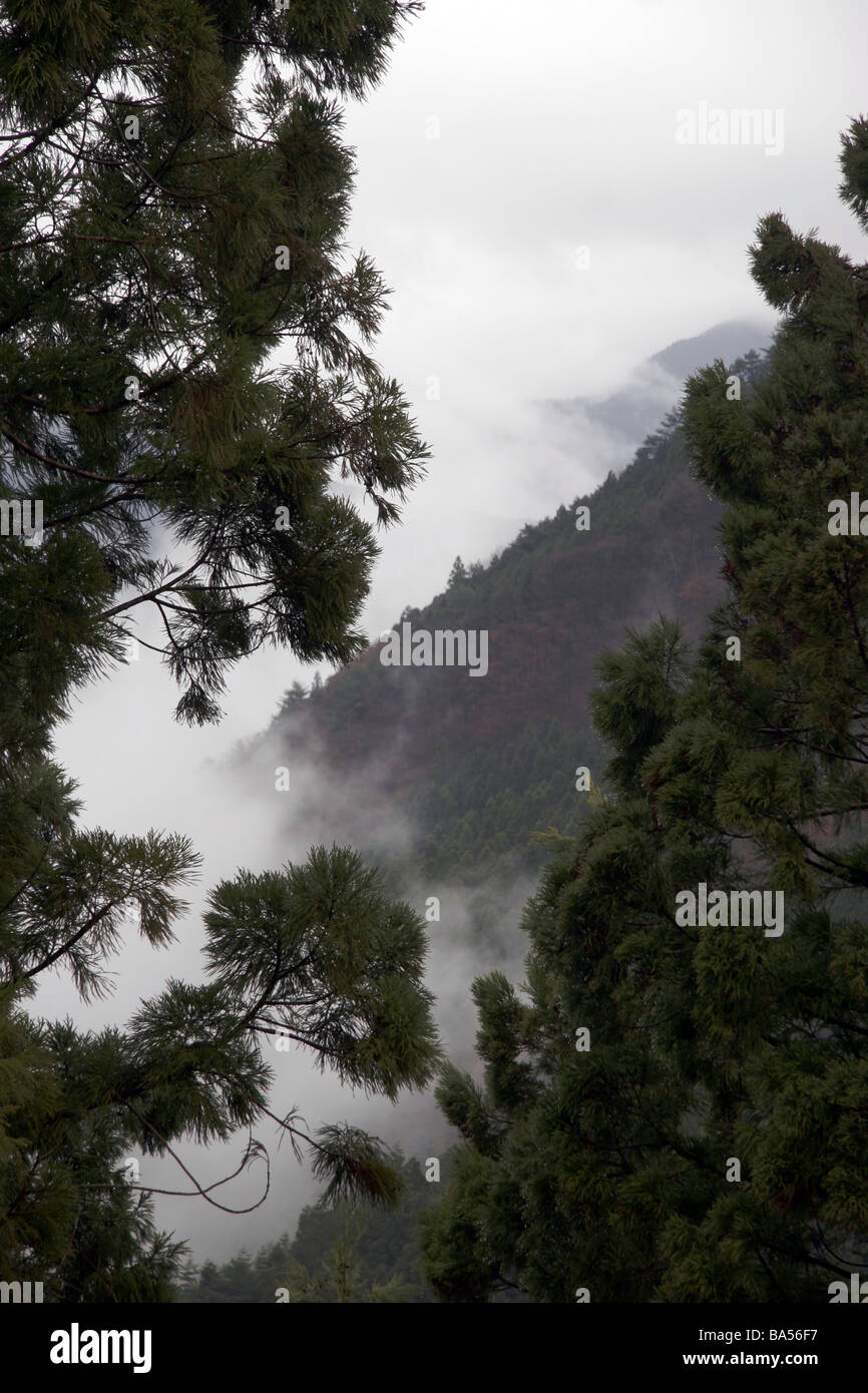 Mist raising through the trees in the Iya Vally Japan - Stock Image