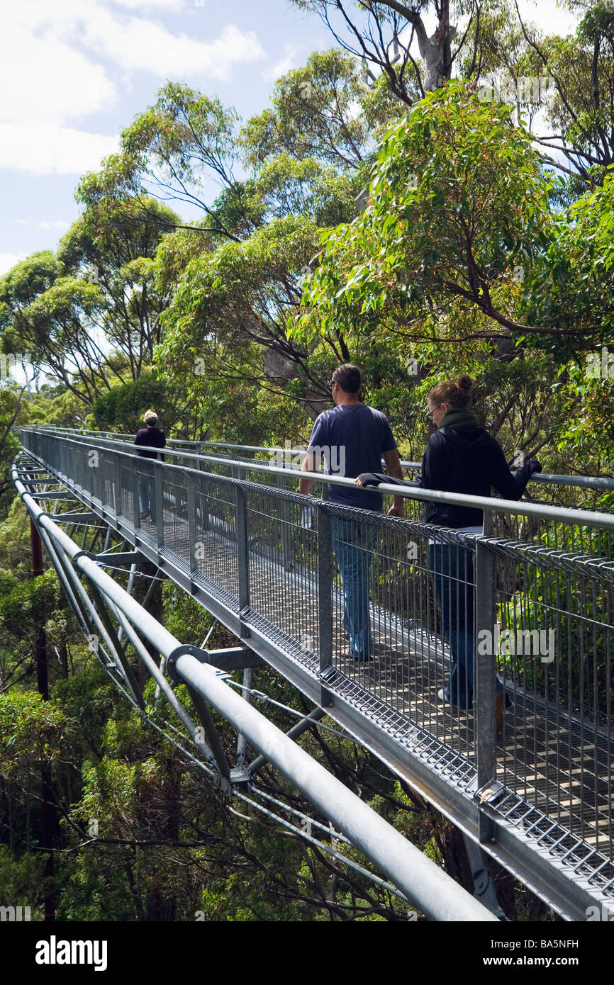 The Tree Top Walk.  Walpole-Nornalup National Park, Western Australia, AUSTRALIA - Stock Image