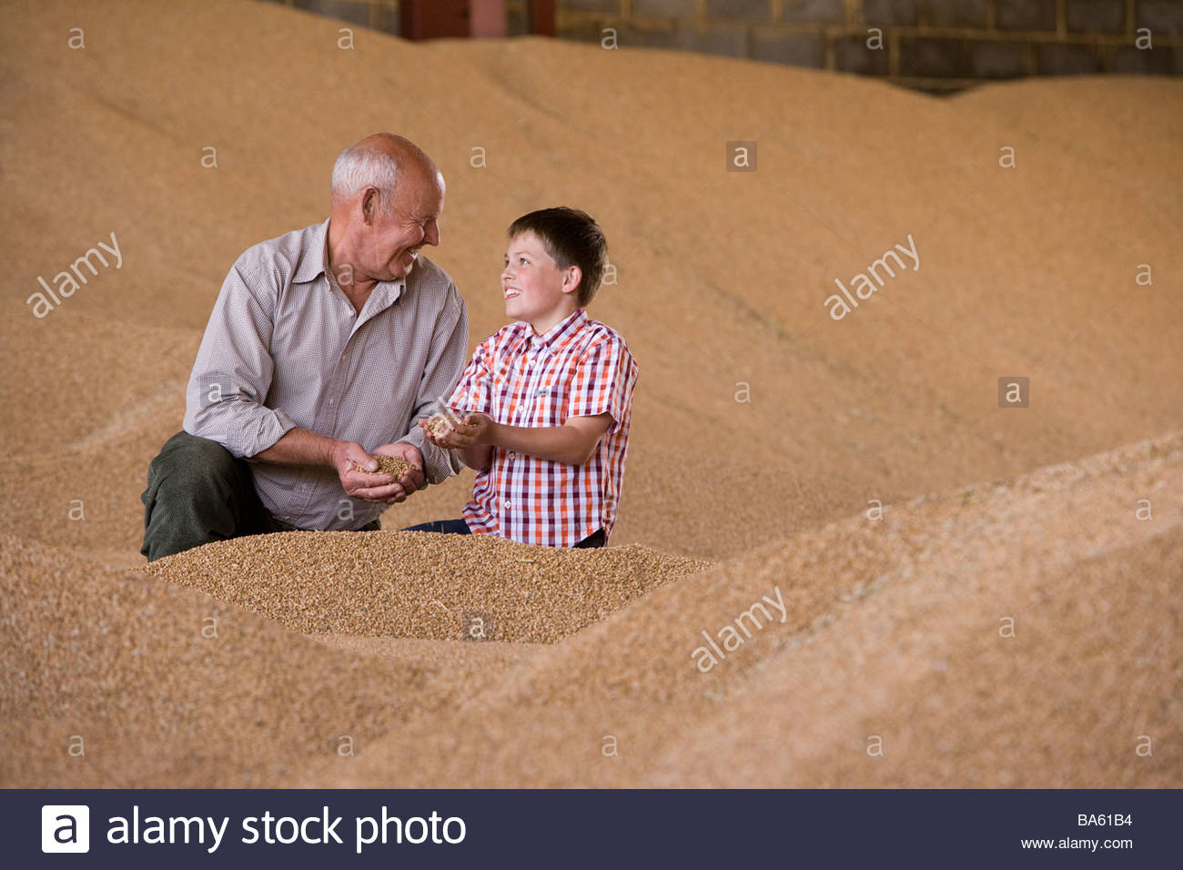 Farmer and grandson cupping wheat grains on grain heap - Stock Image