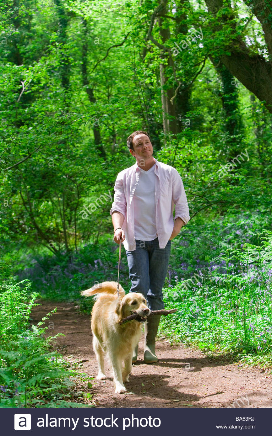 Man and dog walking in forest among bluebell flowers - Stock Image