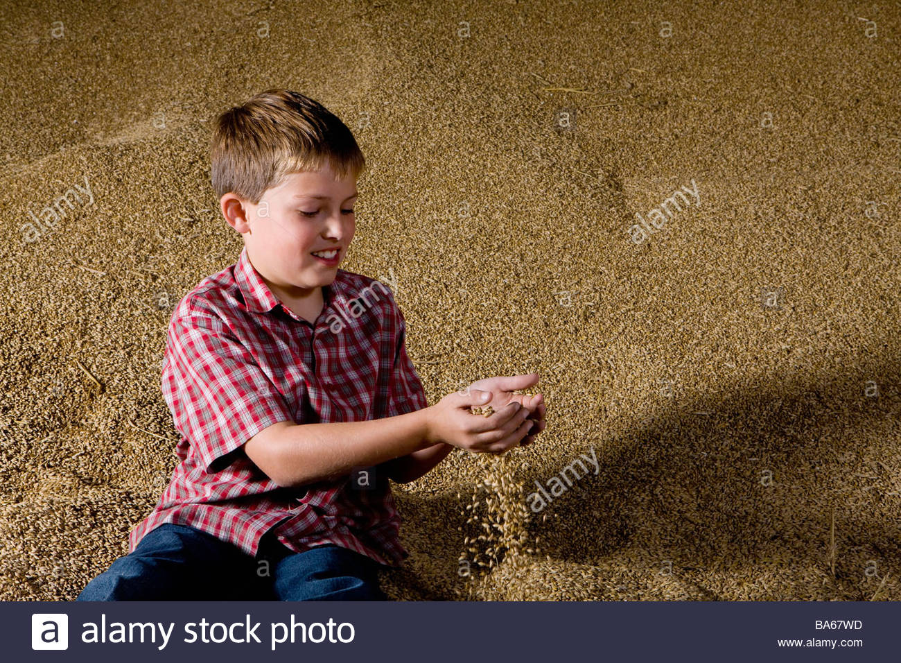 Boy playing with wheat grains from mound - Stock Image