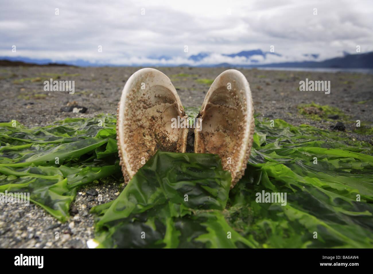 usa alaska alexander archipelago beach ebb mussel seaweed cloud computing vectors cloud vectors illustrator
