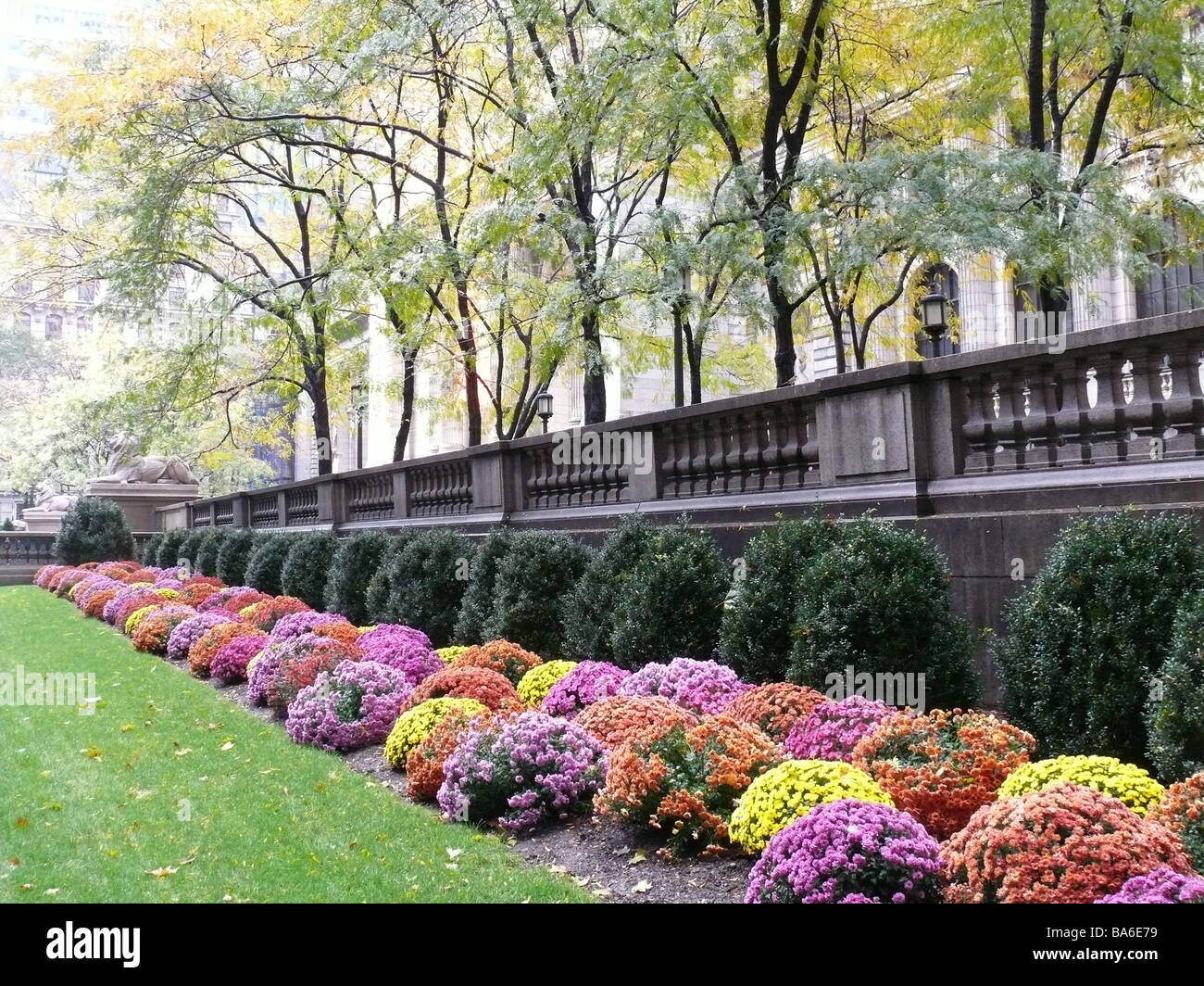 USA New York City New York Public Library Outside Garden Flower Beds  America City Manhattan Buildings Facade Detail Wall Garden