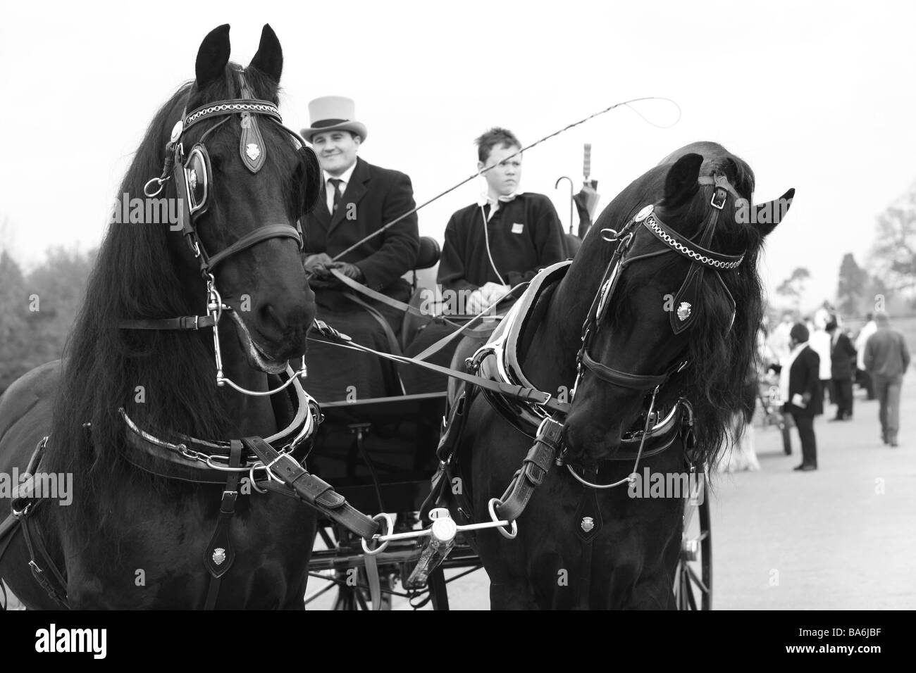 Horses pulling carriages at The London Harness Horse Parade - Stock Image