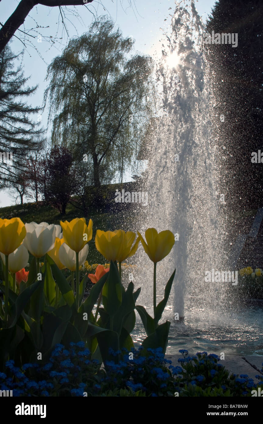 Tulips and a water fountain against the sunlight on a perfect spring day in Nyon, Switzerland - Stock Image
