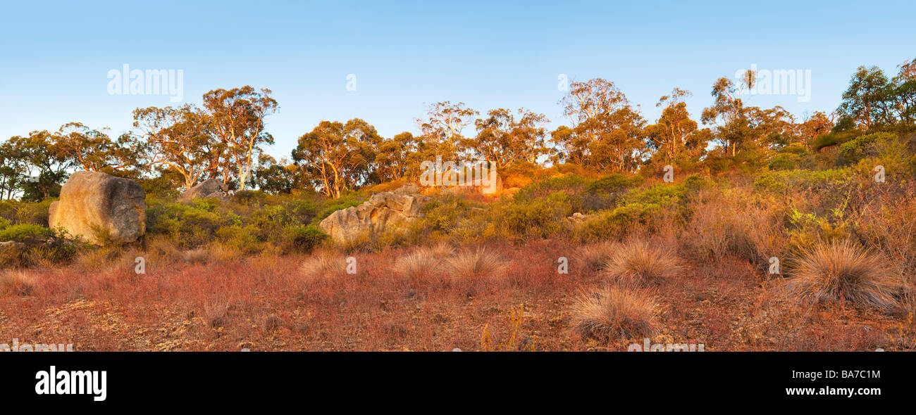 Eucalyptus trees and bushland growing on the granite escarpments of John Forrest National Park. Perth, Western Australia Stock Photo