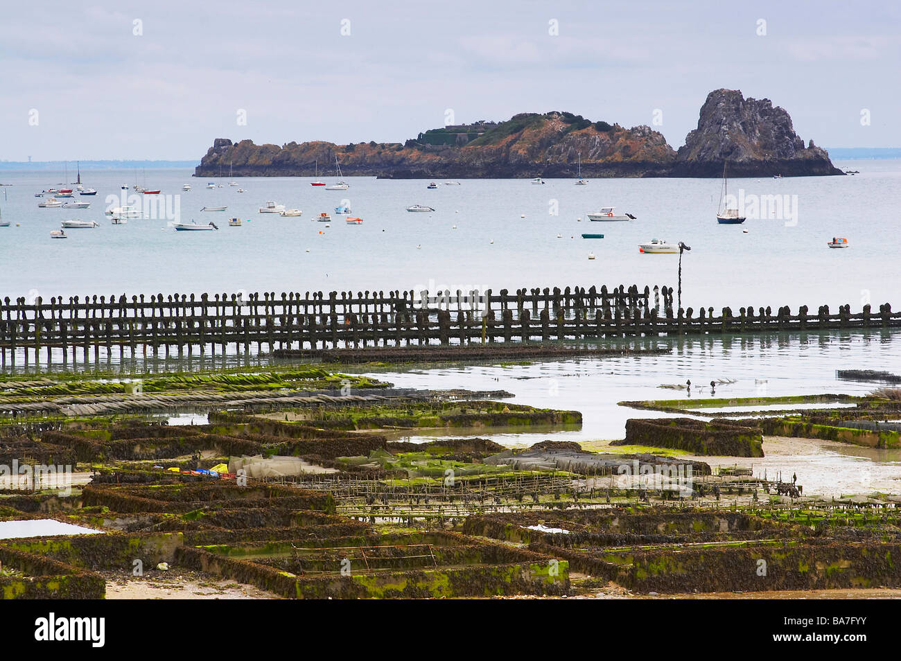 Oyster-culture in Cancale, dept Ille-et-Vilaine, Britany, France Stock Photo