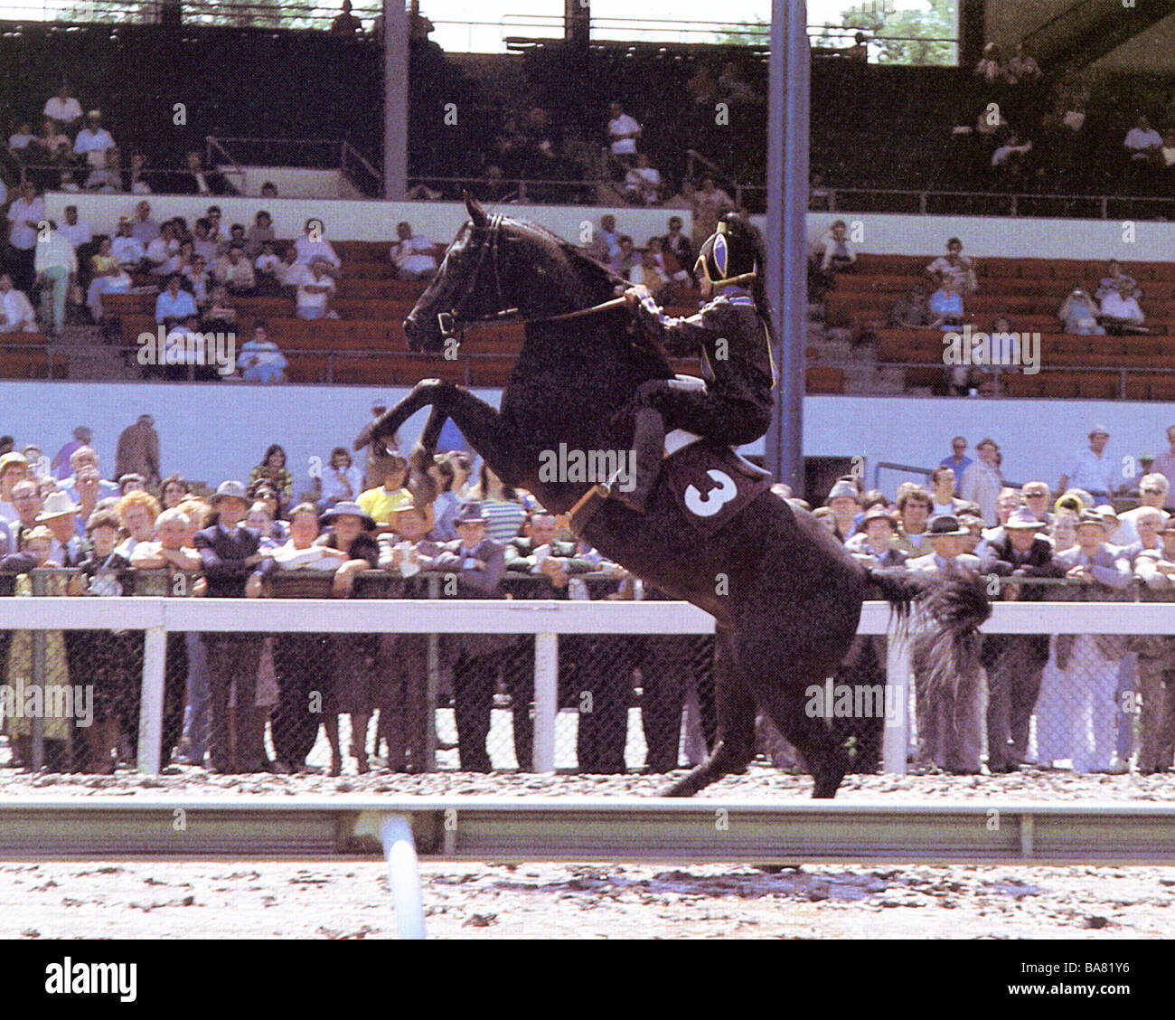 THE BLACK STALLION  1980 UA film - Stock Image