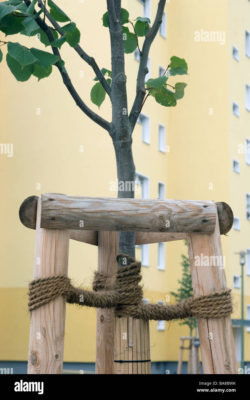 wooden support for young tree - Stock Image