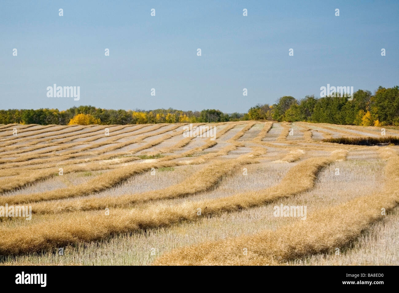 Harvested field - Stock Image