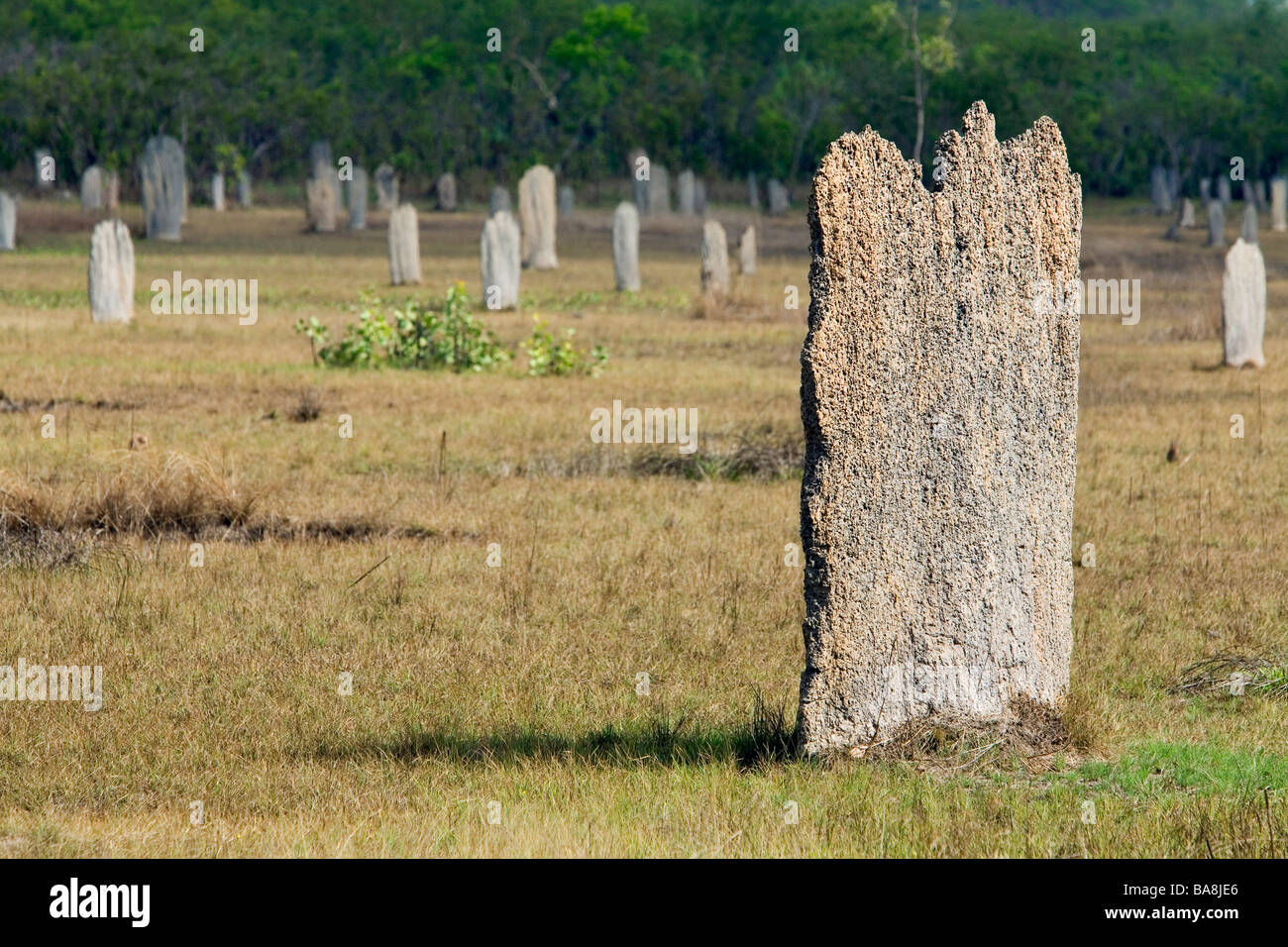 Magnetic Termite mounds.  LItchfield National Park, Northern Territory, AUSTRALIA - Stock Image