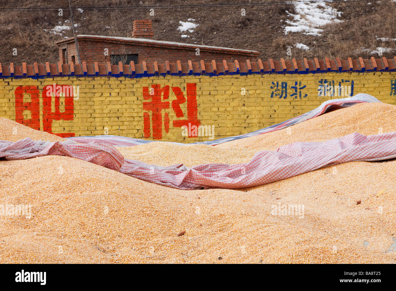 Maize store in Heilongjiang Province Northern China - Stock Image