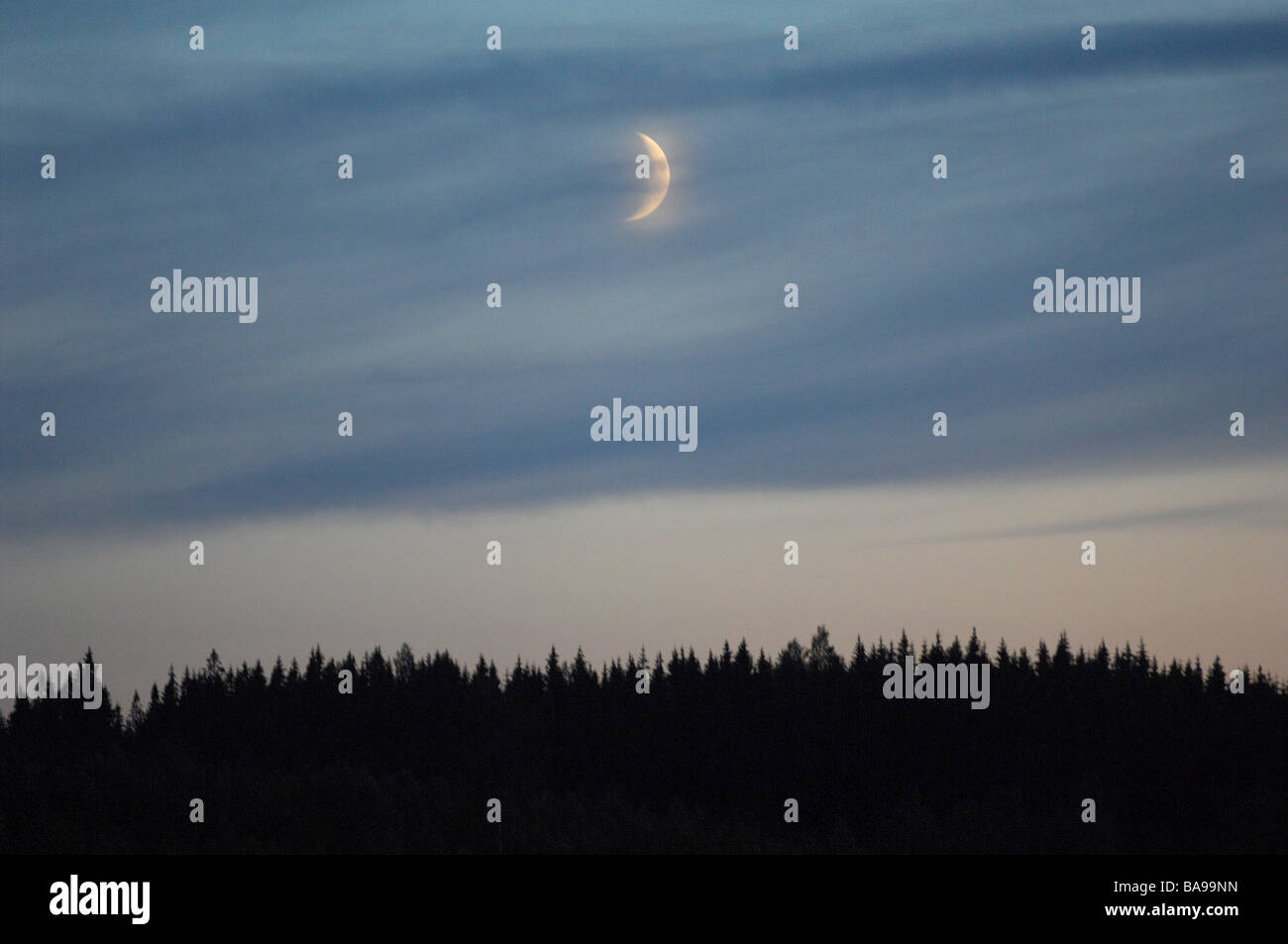 A moon over a forest, Sweden. - Stock Image